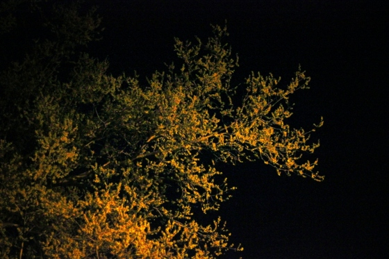 Tree in Streetlight 2