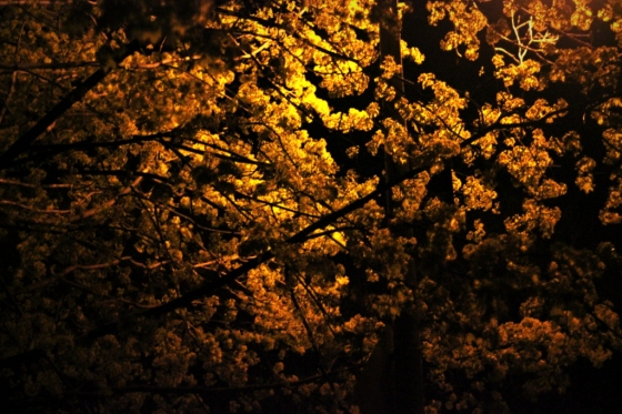 Tree in Streetlight 3